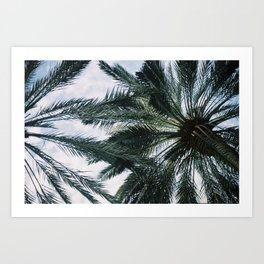Palm trees in Miami Art Print