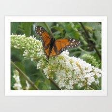 Monarch on Butterfly Bush Art Print
