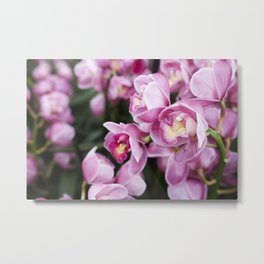 Orchid Blooms  |  Botanical Lovin' Metal Print
