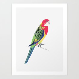 Rosella Art Print