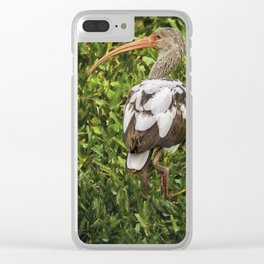 White Ibis - Adult and Juvenile Clear iPhone Case