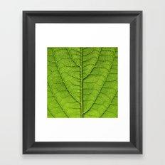 green leaf structure XII Framed Art Print