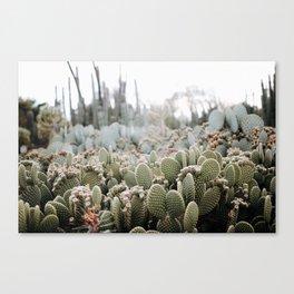 Desert Sunrise Canvas Print