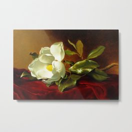 A White Magnolia on Red Velvet by Martin Johnson Head Metal Print