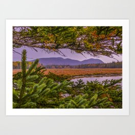 The Clarity in the Clearing Art Print