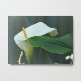 The Death Lilly Metal Print