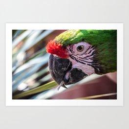 Colorful Guacamaya Art Print