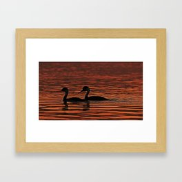 Two Grebes glide along together in the early morning light Framed Art Print