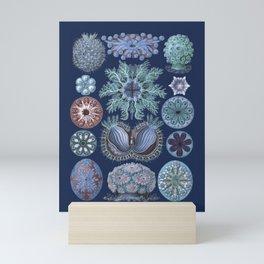 Ernst Haeckel Ascidiae Sea Squirts Cool Blues Mini Art Print
