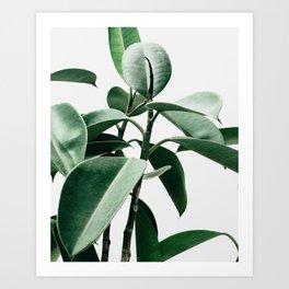 Plant, Green, Minimal, Trendy decor, Interior, Wall art, Photo Art Print