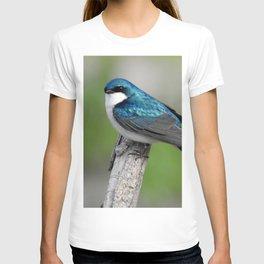 Male Tree Swallow II T-shirt