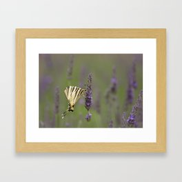 Lavender and a Butterfly-An Essential Friend Framed Art Print
