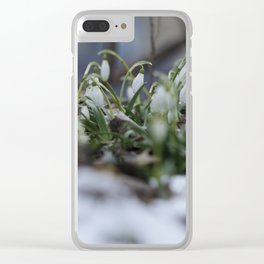 snow drop flowers - a sign of spring Clear iPhone Case