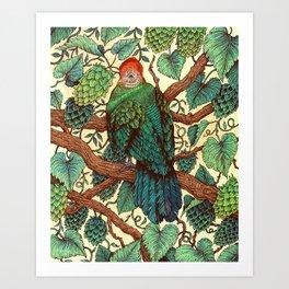 Tipsy Turaco Art Print