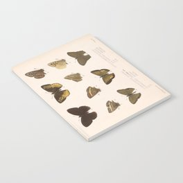 Vintage Scientific Hand Drawn Illustration Anatomy Of Butterfly Insect Patterns Biology Art Notebook