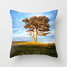 Tree In Spotlight Throw Pillow