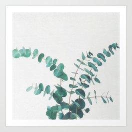 Eucalyptus II Art Print