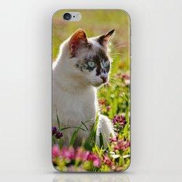 tortoiseshell cat in a meadow iPhone Skin
