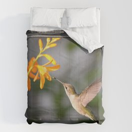 Visiting George Davidson Comforters