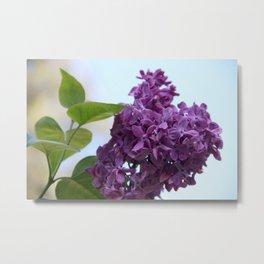 Spring - Morning Lilac Metal Print