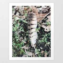 Birds of a......(2) Art Print