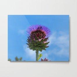 Cardoon Flower Metal Print