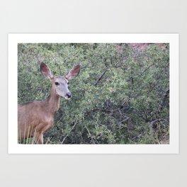 Mule Deer Mama Art Print