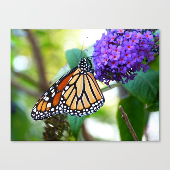 monarch II Canvas Print
