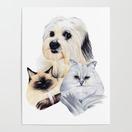 2 Cats and a Pup Poster