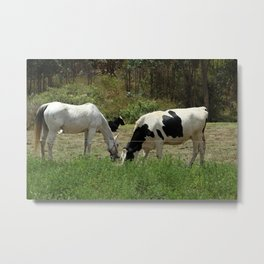 Horse and Cow in a Fence Metal Print