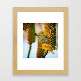 Silvereye Launch Framed Art Print