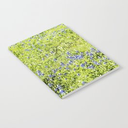 Texas Bluebonnet Field Notebook