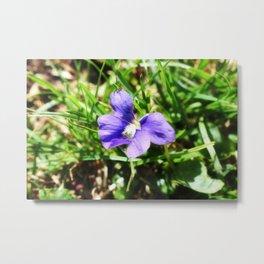 Violet 01 Metal Print