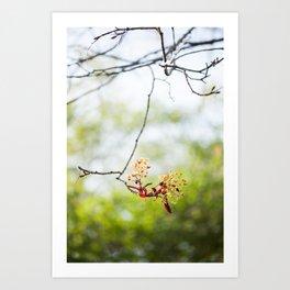 Maple Puff Art Print