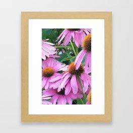 Pink Pop Framed Art Print