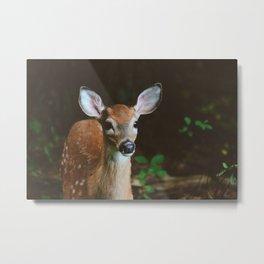 Forest Deer XXVI Metal Print