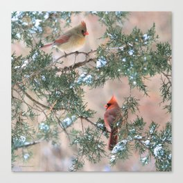 Winter Pair Cardinals (sq) Canvas Print