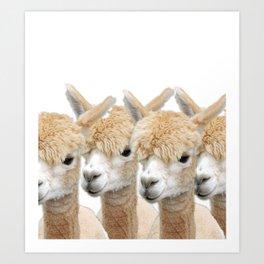 Alpaca Line Up Art Print