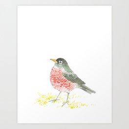 American Robin. Art Print