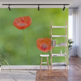 Red poppies - minimal photography #poppy #red #flower #nature Wall Mural