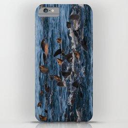 Vivacious Sea Lions iPhone Case