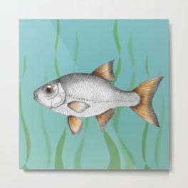 Common roach fish Metal Print