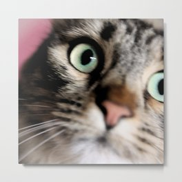 cats square o2 Metal Print