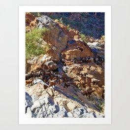 Goat in a Canyon, Oman Art Print