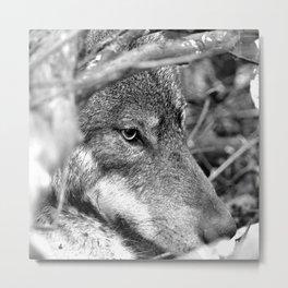 Hidden Wolf Metal Print