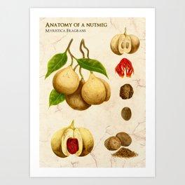 Anatomy of a Nutmeg Art Print