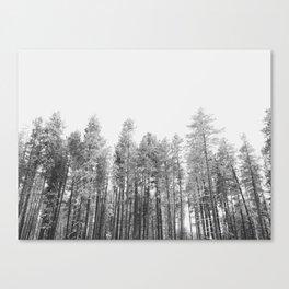Winter Trees Canvas Print