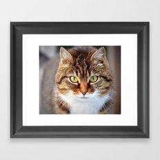Cat Photo Framed Art Print