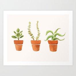 Tiny Succulents Art Print