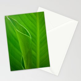Leaves of Canna Lily Plant Nature / Botanical Photograph Stationery Cards